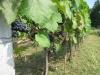 Winnice-Przeworskie