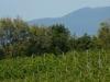 Vihorlat-volcano